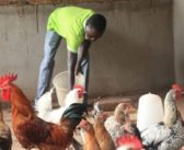 Togo : à la rencontre de Tienebia LARE, un bénéficiaire du PPAAO