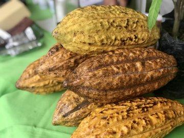 Togo : finis la contrebande et le trafic du café-cacao